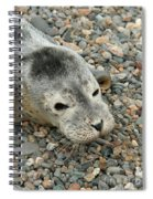 Injured Harbor Seal Spiral Notebook