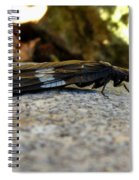 Insect Stripes Spiral Notebook
