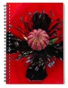 Inside A Poppy Spiral Notebook