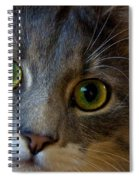 Intrigue Spiral Notebook