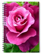 Intrigue Rose Spiral Notebook