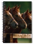 Ireland Thoroughbred Horses Spiral Notebook