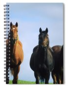 Ireland Thoroughbred Yearlings Spiral Notebook