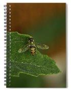 Iridescent Fly 1 Spiral Notebook