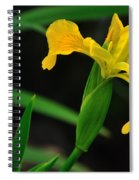 Iris In Yellow Spiral Notebook