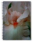 Iris Orange Beard Spiral Notebook
