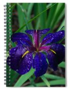 Iris With Rain Drops Spiral Notebook