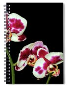 Isolated Orchids Spiral Notebook