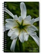 Ivory Star Spiral Notebook