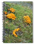 Jack Olantern Mushrooms 15 Spiral Notebook