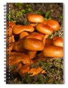 Jack Olantern Mushrooms 30 Spiral Notebook