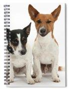 Jack Russell Terrier Dog, Rockie Spiral Notebook