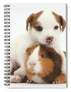 Jack Russell Terrier Puppy And Guinea Spiral Notebook