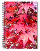 Japanese Maple Leaves 11 In The Fall Spiral Notebook