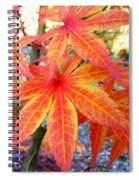 Japanese Maple Leaves 13 In The Fall Spiral Notebook