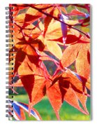 Japanese Maple Leaves 6 In The Fall Spiral Notebook