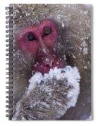 Japanese Snow Monkey Spiral Notebook