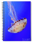 Jellyfish 4 Spiral Notebook