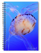 Jellyfish 5 Spiral Notebook