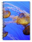 Jellyfish 6 Spiral Notebook