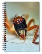 Jiminy Cricket Spiral Notebook