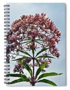 Joe-pye Weed Wildflower - Eupatorium Spiral Notebook