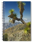 Joshua Trees Number 357 Spiral Notebook