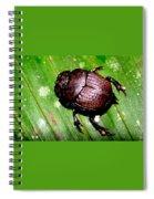 Jungle Beetle Spiral Notebook