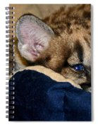 Just A Big Kitten Spiral Notebook