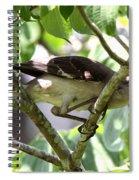 Just Curious Spiral Notebook