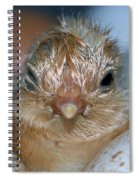 Just Hatched Spiral Notebook
