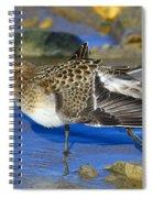 Juvenile Baird's Sandpiper Spiral Notebook