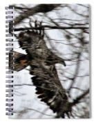 Juvenile Bold Eagle Spiral Notebook