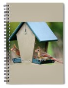 Juvenile Cardinals On Feeder Spiral Notebook