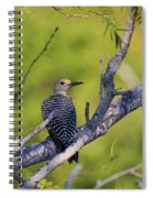 Juvenile Golden-fronted Woodpecker Spiral Notebook