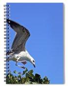 Juvenile Herring Gull Spiral Notebook
