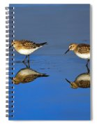 Juvenile White-rumped Sandpipers Spiral Notebook