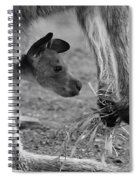 Kangaroo Joey Spiral Notebook