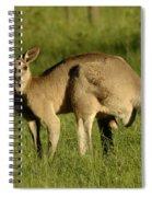 Kangaroo Male Spiral Notebook