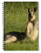 Kangaroo Playing It Cool Spiral Notebook