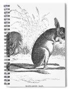 Kangaroo Rat Spiral Notebook