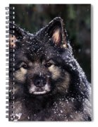 Keeshond Dog, Winnipeg, Manitoba Spiral Notebook