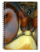 Killer Wasp Spiral Notebook