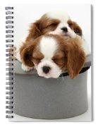 King Charles Spaniel Puppies Spiral Notebook
