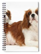 King Charles Spaniels Spiral Notebook