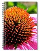 King Cone Spiral Notebook