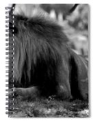 King Of Cats Spiral Notebook