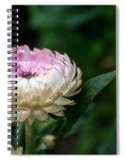 King Rose Strawflower Spiral Notebook