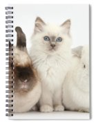 Kitten With Rabbits Spiral Notebook