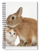 Kitten With Sandy Netherland Spiral Notebook